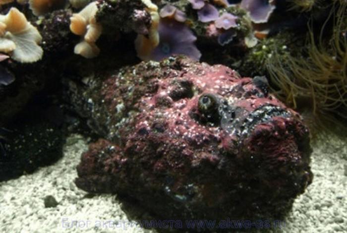 alt=каменная рыба