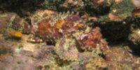Запуск пресноводного аквариумакаменная рыба