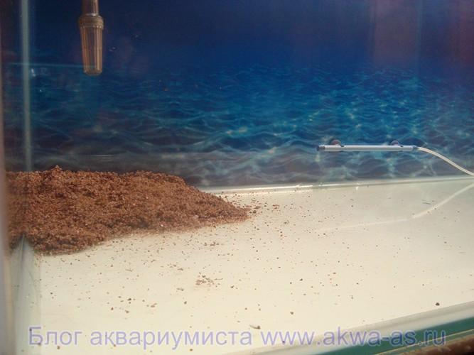 alt=Грунт для аквариума укладываем в аквариум