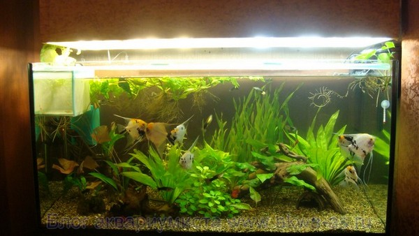 alt=Светильник для аквариума своими руками