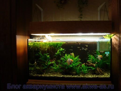 Освещение аквариума своими руками: подбор ламп