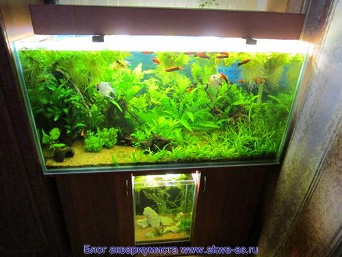 """alt=""""Светильник для аквариума своими руками, вариант 2"""
