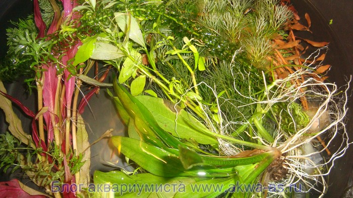 alt=Растения для аквариума с землей