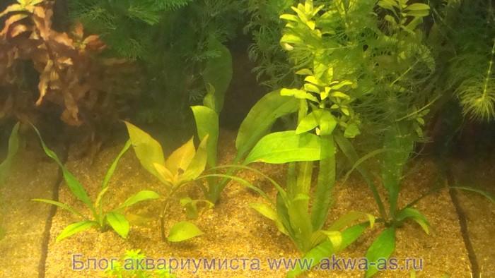 alt=Растения а аквариуме с землей