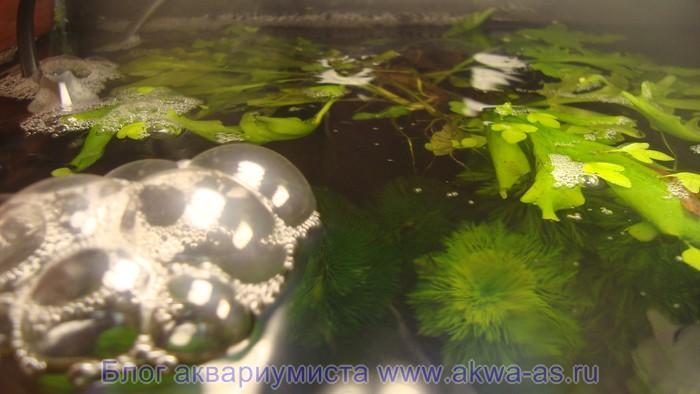 alt=Пена в аквариуме с землей