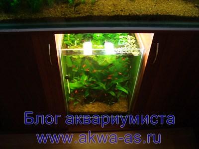 alt=Земля в аквариуме спустя 2 месяца