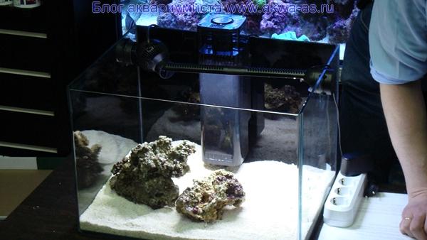 alt=Море своими руками живые камни