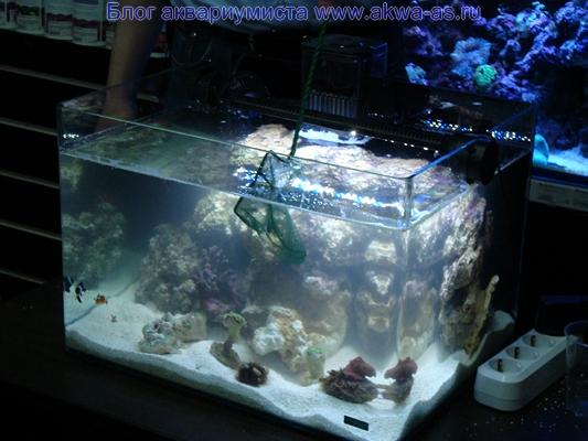 alt=Морской аквариум запуск жителей