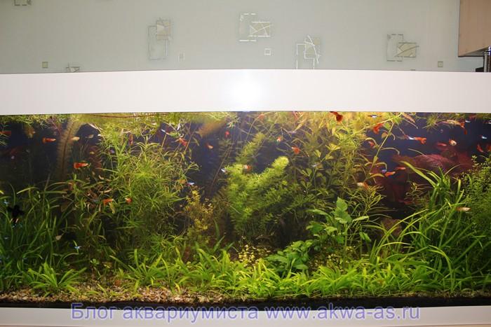 Земля в аквариуме2