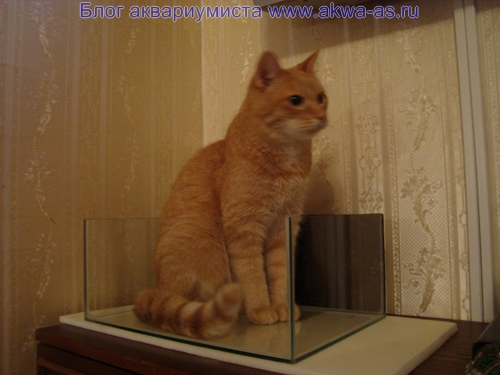 alt=Кот в аквариуме