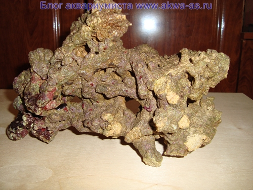 alt=Живые камни для микро моря