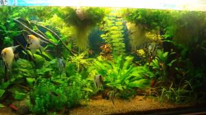 Уход за домашним аквариумом