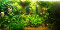 Плёнка на поверхности аквариума,