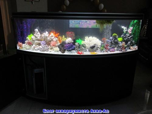 alt=аквариум под ключ