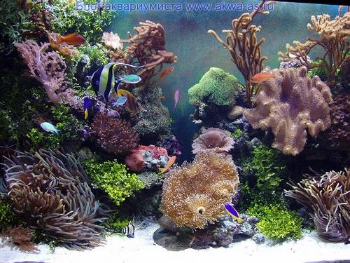 Обслуживание аквариумов и уход