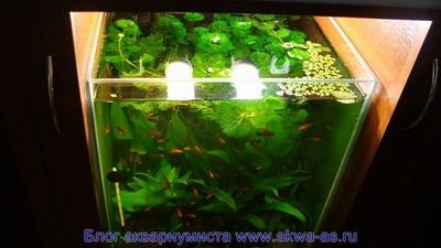 Маленький новый аквариум