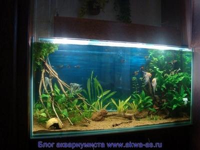 Запуск нового аквариума аквариум залит водой