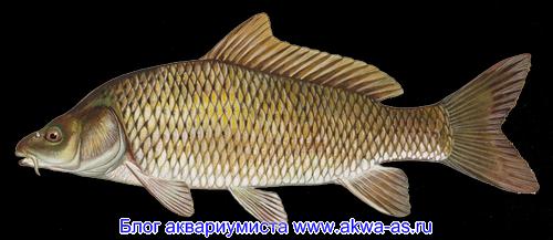 Искусственные корма в выращивании рыб
