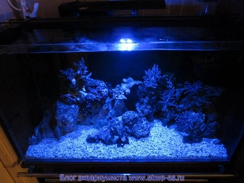 alt=Светильник в морском аквариуме