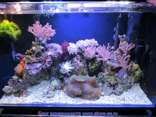 alt=Аквариум под ключ, морской аквариум