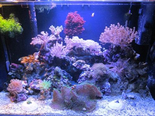 alt=Мой простой морской аквариум