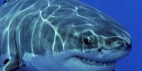 Акулы в аквариуме Дубай