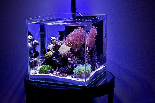 Нано риф авкариум
