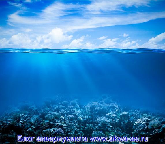 alt=Грунт для морского аквариума