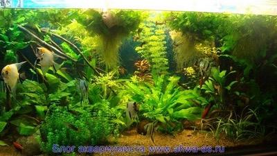 alt=пример аквариума