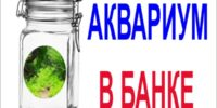 alt=аквариум в банке