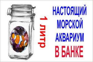 alt=море в банке 1 литр