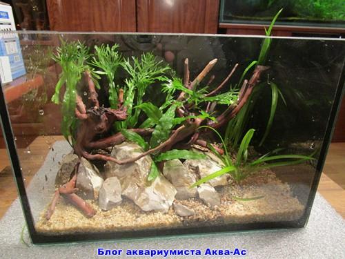 alt=растения для аквариума