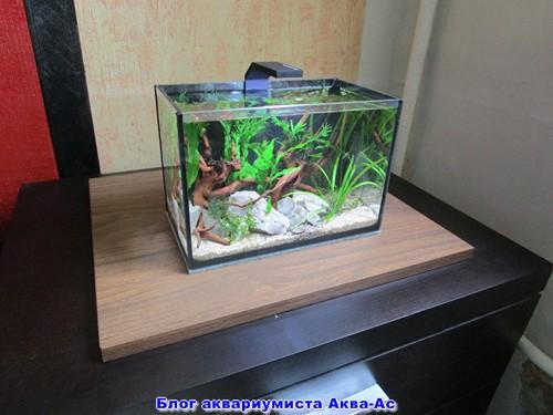 режим какой нано аквариум выбрать на ПОНЯТИЯ, СВЯЗАННЫЕ ИНВАЛИДНОСТЬЮ