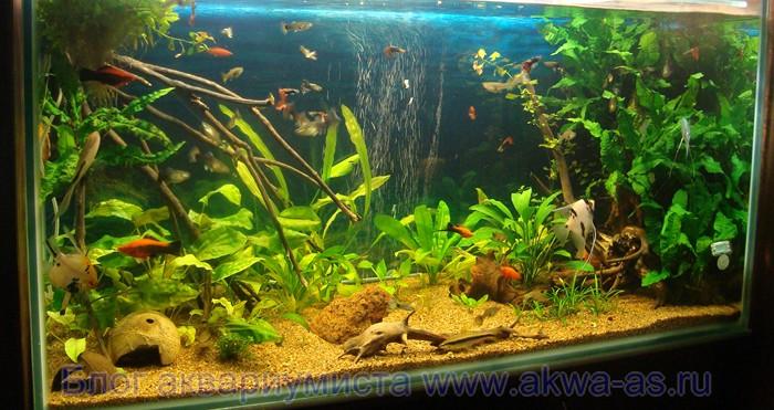 alt=Как подготовить грунт для аквариума