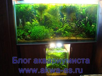 Земля в аквариуме