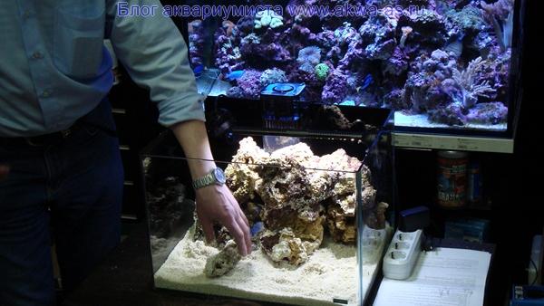 Море своими руками живые камни