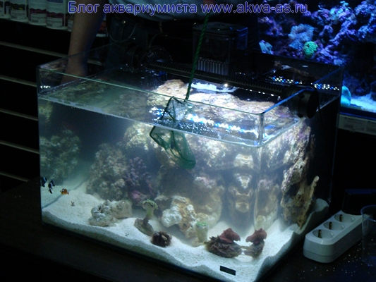 Морской аквариум запуск жителей