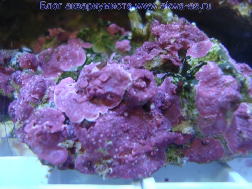 Живые камни для микро моря