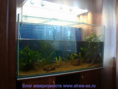Запуск нового акварикма