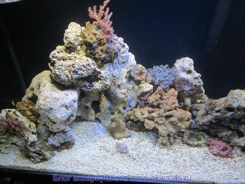 Черноморские камни в аквариуме