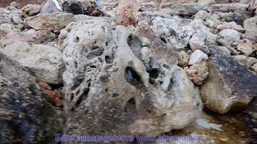 Черноморские камни в море