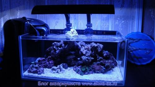 """alt=""""Маленький морской аквариум"""