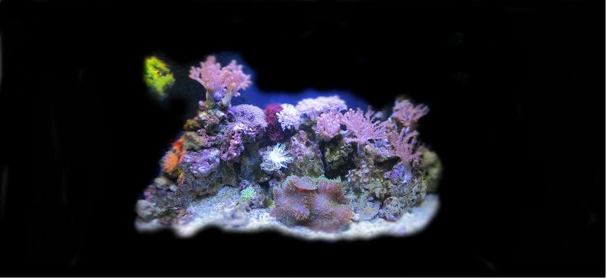 Мой простой морской аквариум