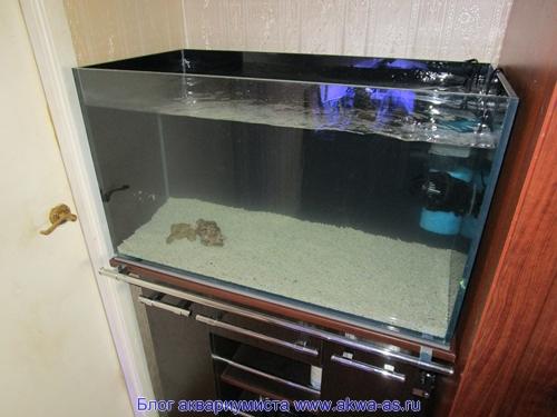 alt=Морской аквариум дома
