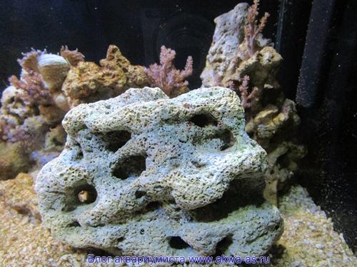 alt=Камни в морском аквариуме