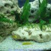 alt=Камни в аквариуме с цихлидами