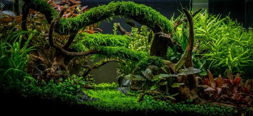 Видео оформление аквариума