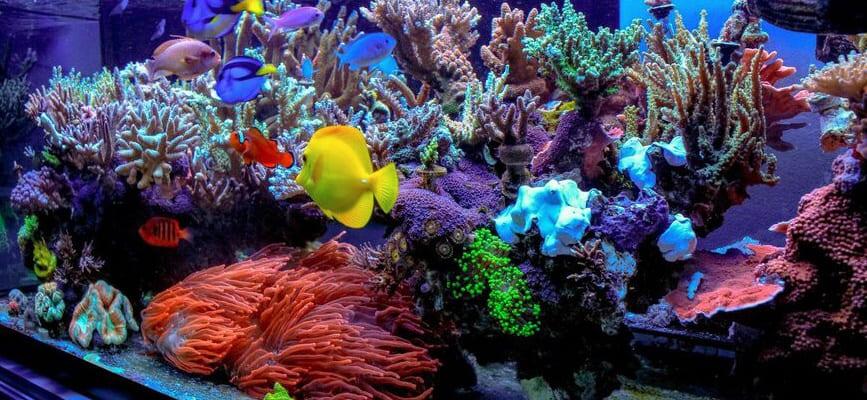 Видео морских аквариумов