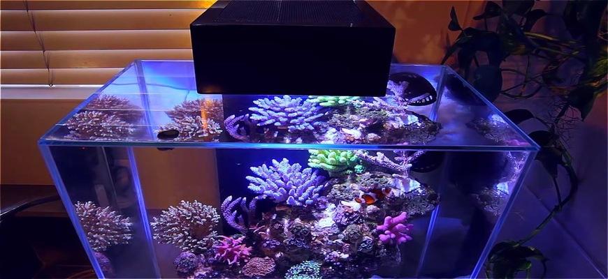 Нано риф