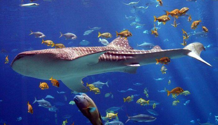 Самый большой аквариум в мире